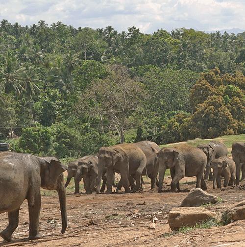 Kiteschule Srilanka – Sri lanka highlight tour / Compact tour