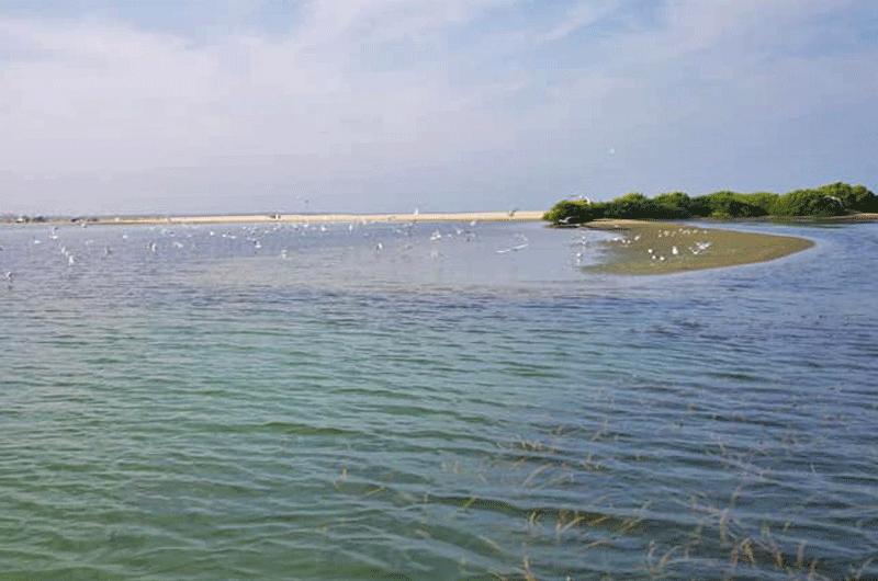 Stand Up Paddling Kalpitiya Lagoon